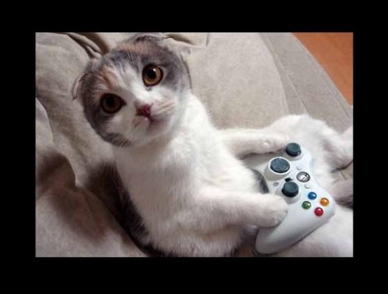 xbox360-cat